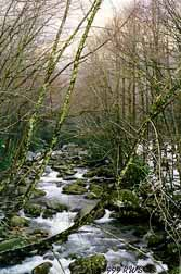 Smokies' Stream -- This picture once appeared in The Southerner as part of our Secret Vistas.